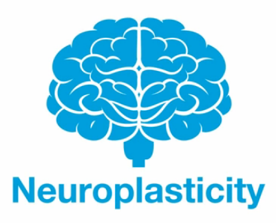The Neuroplasticity Of Relationships Speaker Author